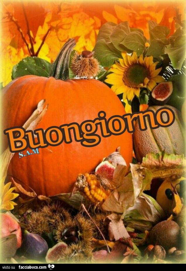 Zucca Di Halloween Buongiorno Facciabucocom